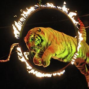 Цирки Электростали