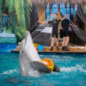 Дельфинарии, океанариумы Электростали
