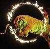 Цирки в Электростале