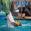 Дельфинарии, океанариумы в Электростале