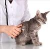Ветеринарные клиники в Электростале